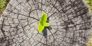 Outplacement helps career development like a leaf becomes a tree
